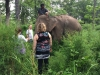 An attractive experience trip of finding Elephant in York Don National park